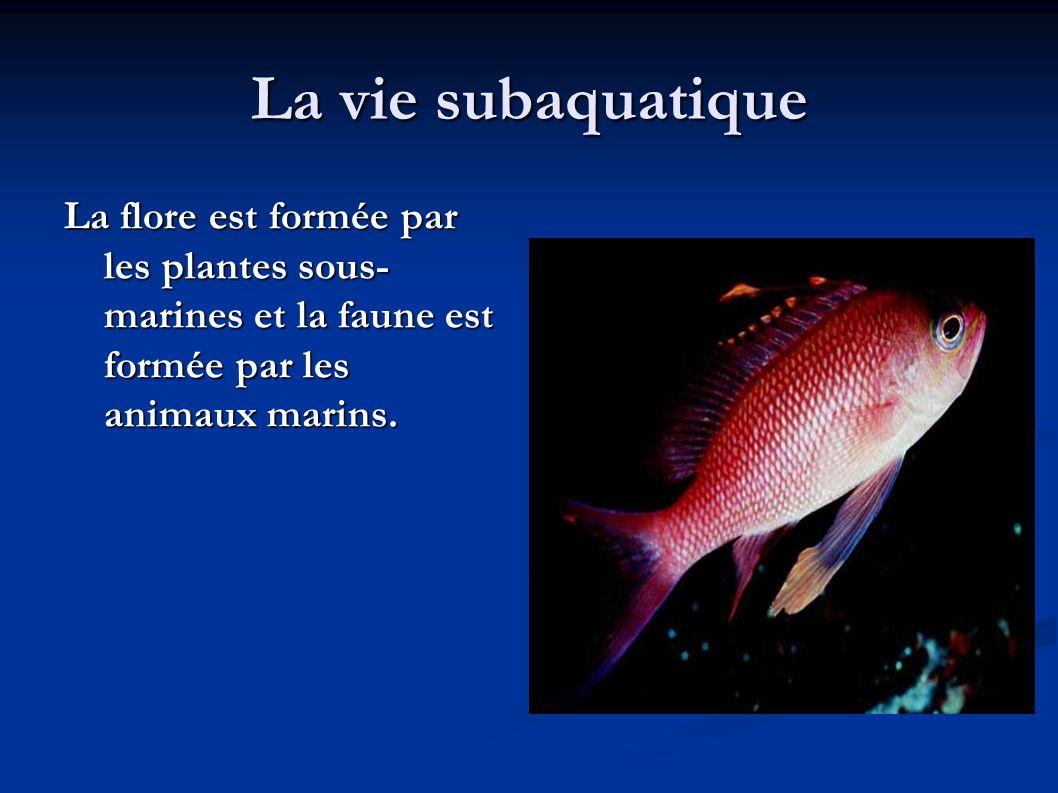 La vie subaquatique La flore est formée par les plantes sous- marines et la faune est formée par les animaux marins.