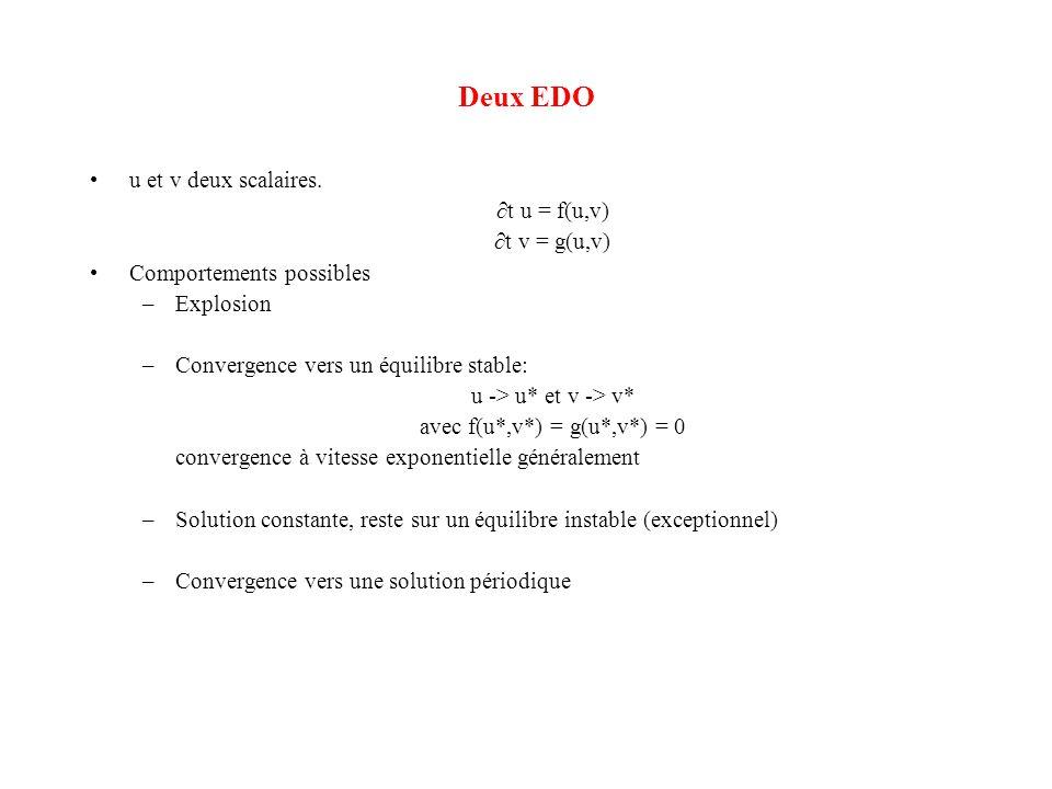 Deux EDO •u et v deux scalaires. ∂t u = f(u,v) ∂t v = g(u,v) •Comportements possibles –Explosion –Convergence vers un équilibre stable: u -> u* et v -