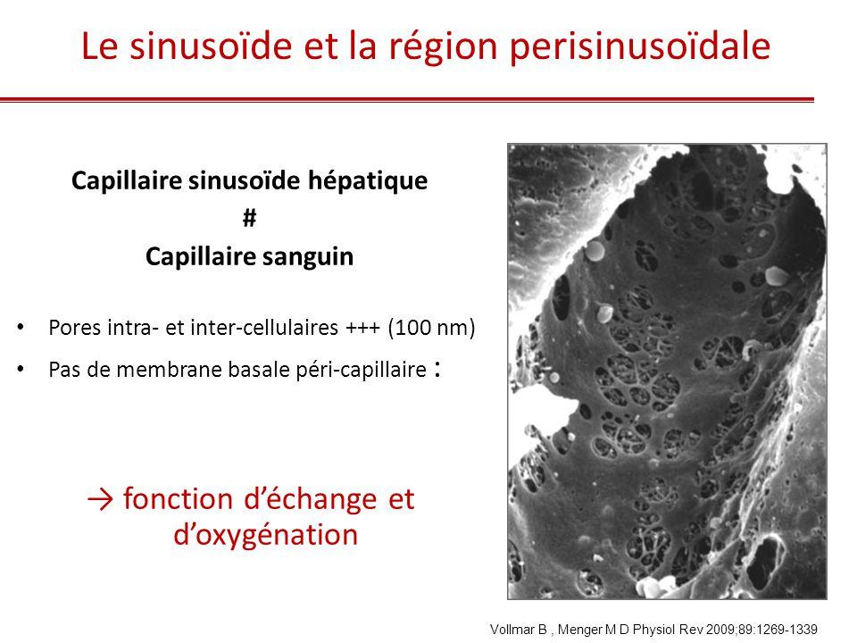 Pathologie du sinusoïde hépatique • Capillarisation des sinusoïdes • Atteinte de l'endothélium sinusoïdal • Dilatation des sinusoïdes • Dépôts sinusoïdaux • Ischémie-reperfusion • Anémie falciforme • Tumeurs de l'endothélium sinusoïdal