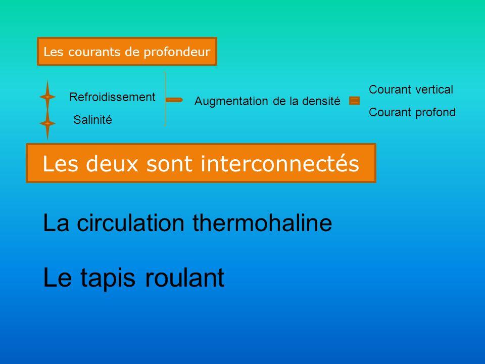 Les courants de profondeur Refroidissement Salinité Augmentation de la densité Courant vertical Courant profond Les deux sont interconnectés La circulation thermohaline Le tapis roulant