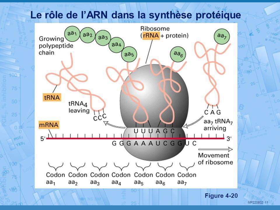MP220802 11 Le rôle de l'ARN dans la synthèse protéique Figure 4-20