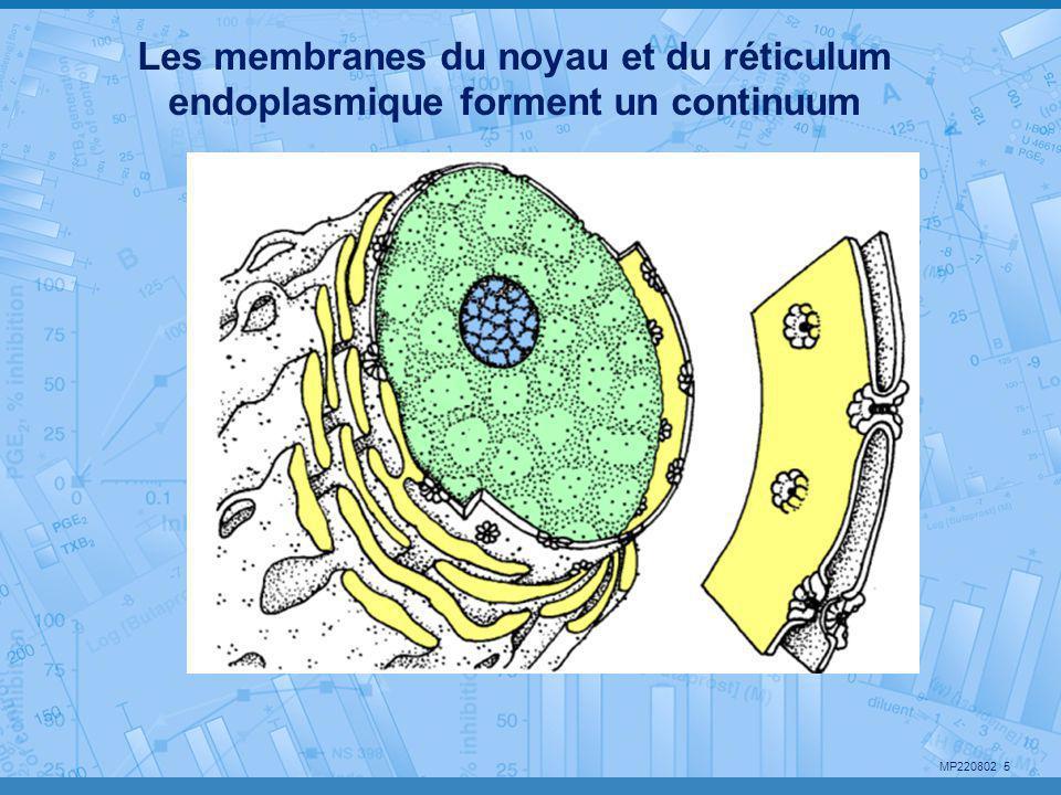 MP220802 5 Les membranes du noyau et du réticulum endoplasmique forment un continuum