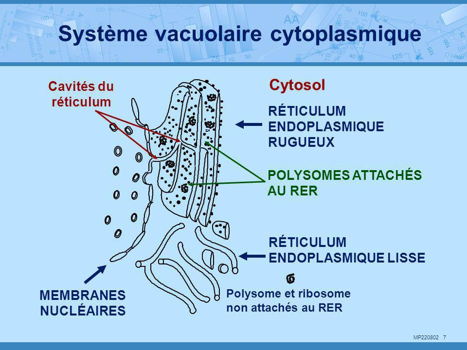 MP220802 7 POLYSOMES ATTACHÉS AU RER MEMBRANES NUCLÉAIRES RÉTICULUM ENDOPLASMIQUE RUGUEUX RÉTICULUM ENDOPLASMIQUE LISSE Polysome et ribosome non attac