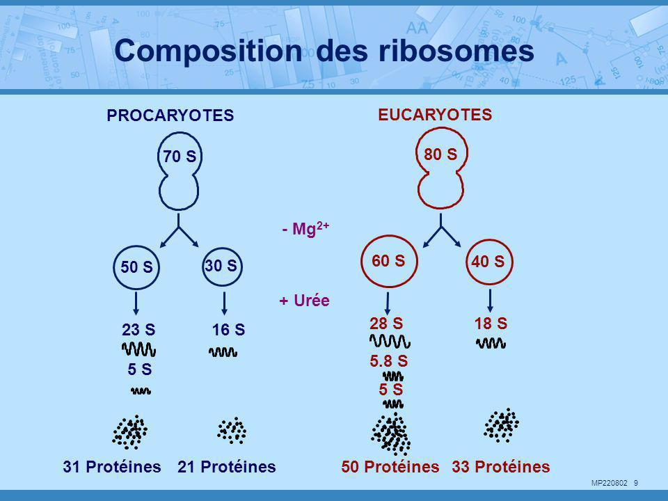 MP220802 20 DICTYOSOME RÉTICULUM ENDOPLASMIQUE RUGUEUX Face de formation (cis) Face de maturation (trans) VÉSICULES et GRAINS DE SÉCRÉTION VÉSICULES DE TRANSITION MEMBRANE PLASMIQUE Participation des dictyosomes dans l'exocytose