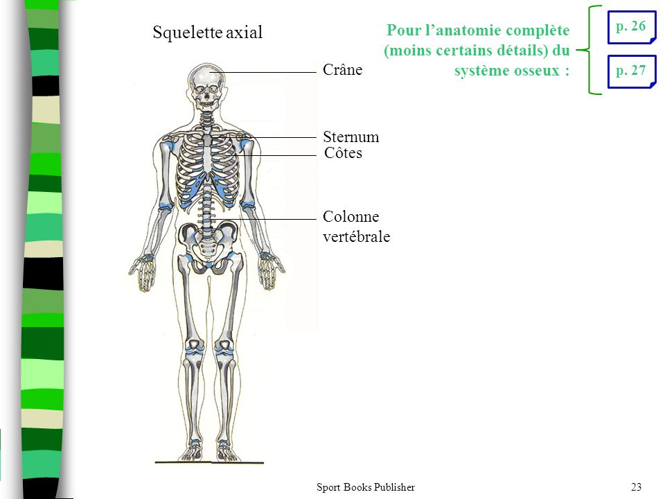 Sport Books Publisher23 Crâne Sternum Côtes Colonne vertébrale Squelette axial p. 26p. 27 Pour l'anatomie complète (moins certains détails) du système