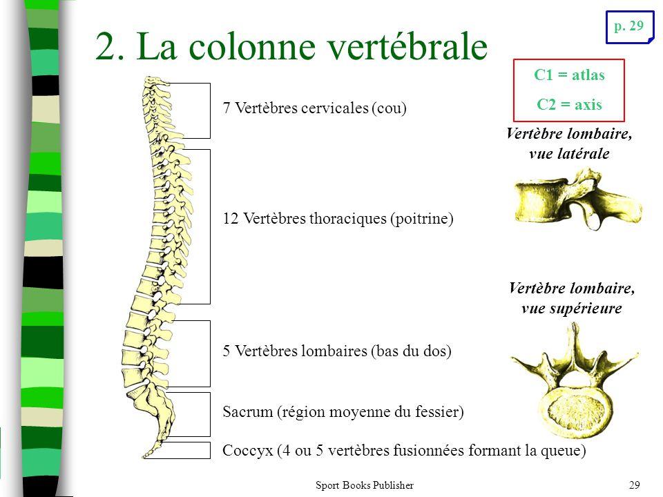 Sport Books Publisher29 2. La colonne vertébrale Sacrum (région moyenne du fessier) Coccyx (4 ou 5 vertèbres fusionnées formant la queue) 7 Vertèbres