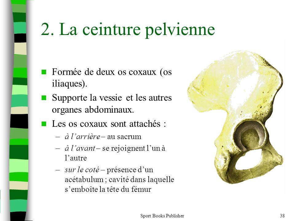 Sport Books Publisher38 2. La ceinture pelvienne  Formée de deux os coxaux (os iliaques).  Supporte la vessie et les autres organes abdominaux.  Le