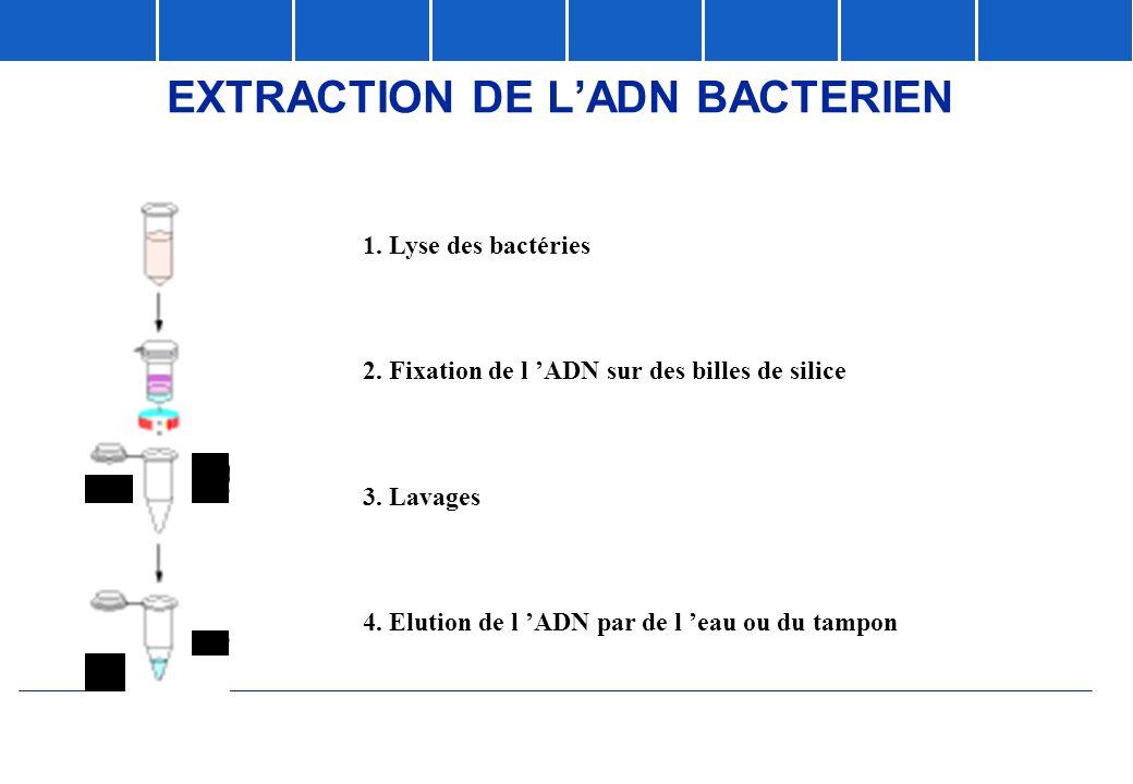 1. Lyse des bactéries 2. Fixation de l 'ADN sur des billes de silice 3. Lavages 4. Elution de l 'ADN par de l 'eau ou du tampon EXTRACTION DE L'ADN BA