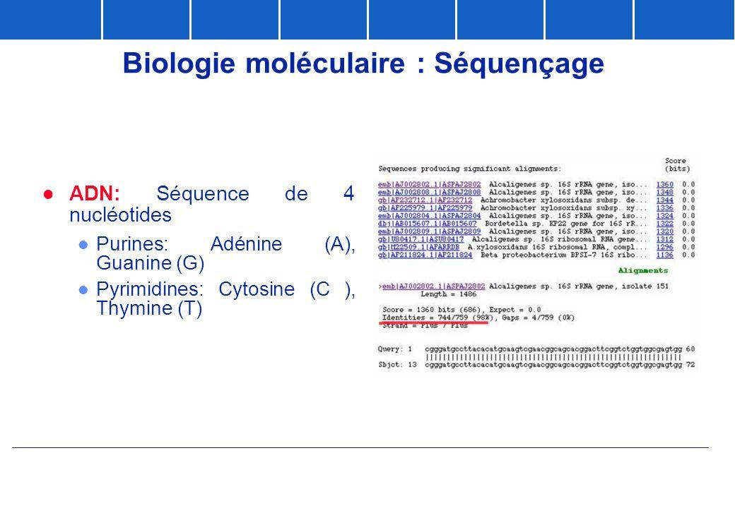 Biologie moléculaire : Séquençage  ADN: Séquence de 4 nucléotides l Purines: Adénine (A), Guanine (G) l Pyrimidines: Cytosine (C ), Thymine (T)