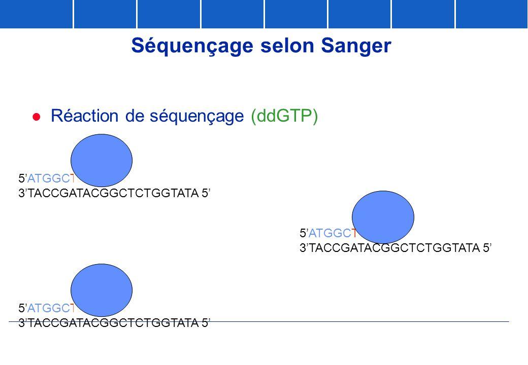 Séquençage selon Sanger  Réaction de séquençage (ddGTP) 5'ATGGCTATGCCGAG 3'TACCGATACGGCTCTGGTATA 5' 5'ATGGCTATGCCG 3'TACCGATACGGCTCTGGTATA 5' 5'ATGGC