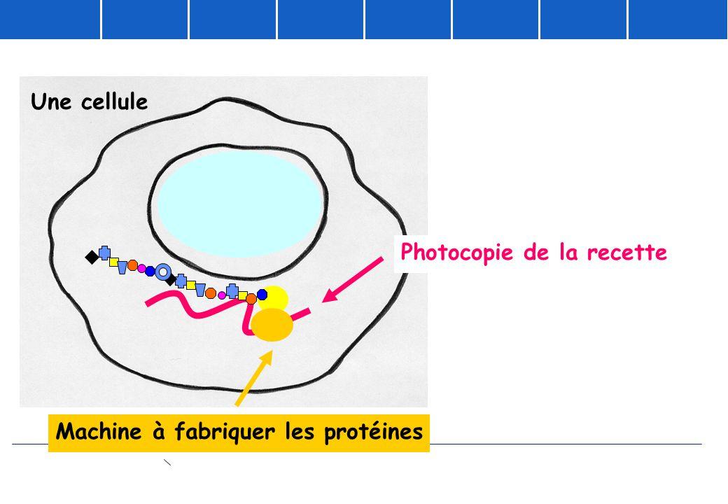 Photocopie de la recette Machine à fabriquer les protéines Une cellule
