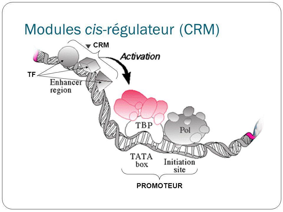 Modules cis-régulateur (CRM) CRM TF PROMOTEUR