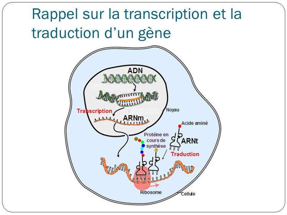 Régulation de l'expression des gènes Croissance cellulaire Différentiation Division Adaptation à l'environnement