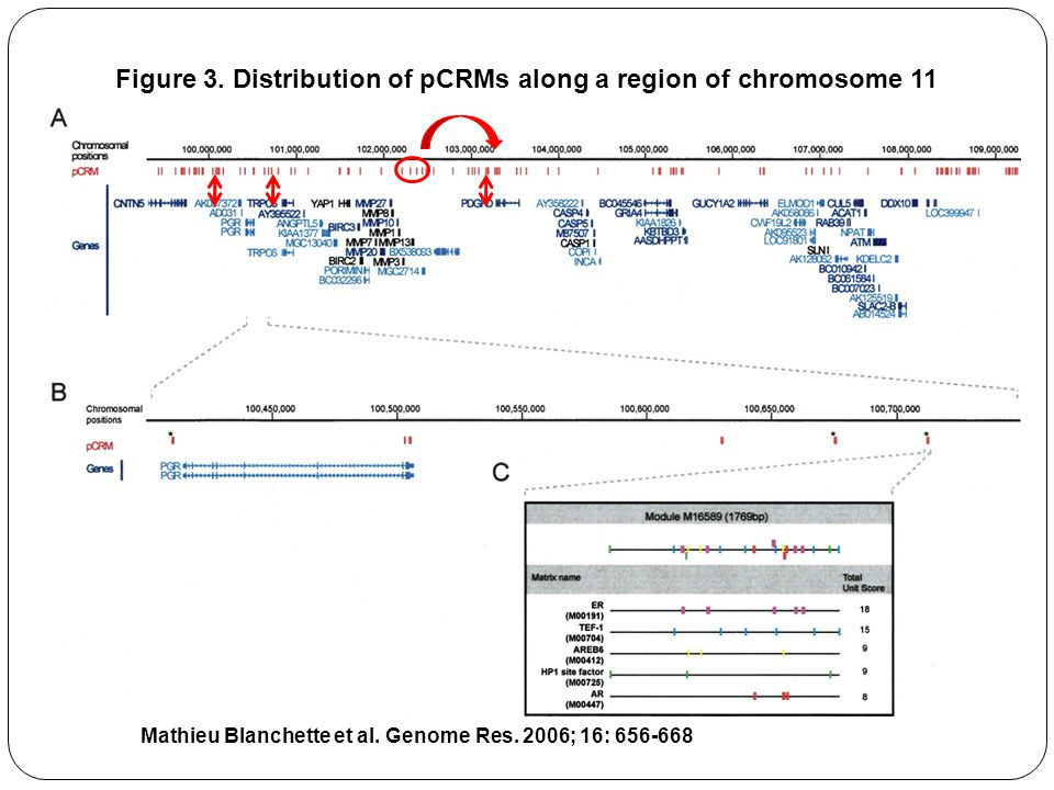 Mathieu Blanchette et al.Genome Res. 2006; 16: 656-668 Figure 3.