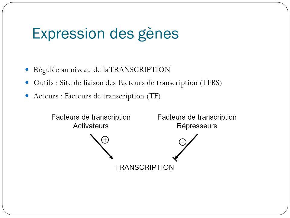 Expression des gènes  Régulée au niveau de la TRANSCRIPTION  Outils : Site de liaison des Facteurs de transcription (TFBS)  Acteurs : Facteurs de transcription (TF) Facteurs de transcription Activateurs Facteurs de transcription Répresseurs TRANSCRIPTION + -