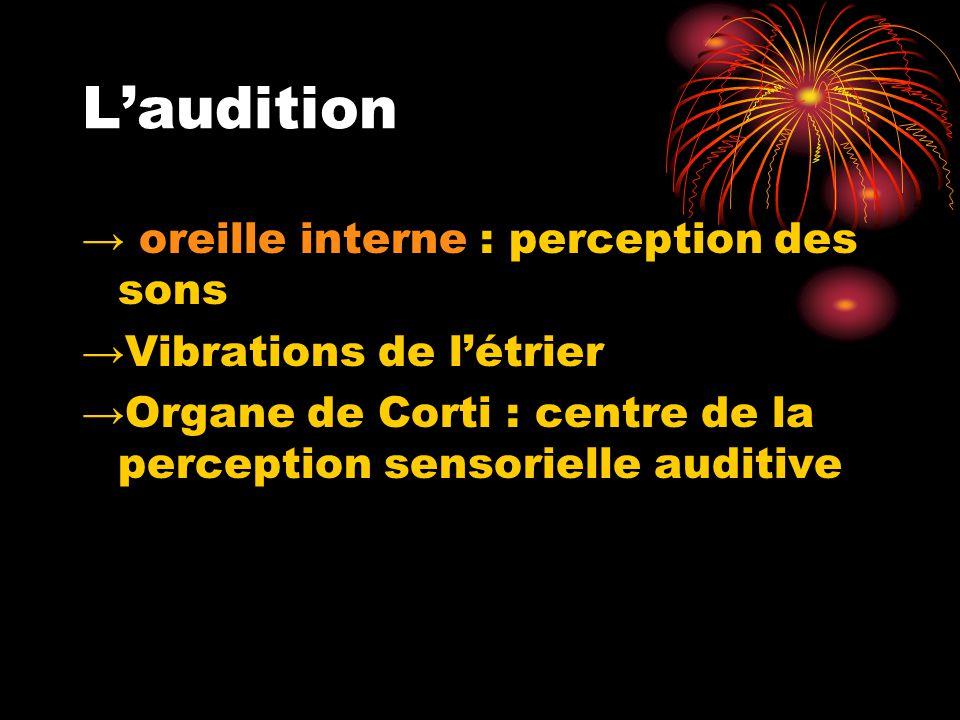 L'audition → oreille interne : perception des sons →Vibrations de l'étrier →Organe de Corti : centre de la perception sensorielle auditive