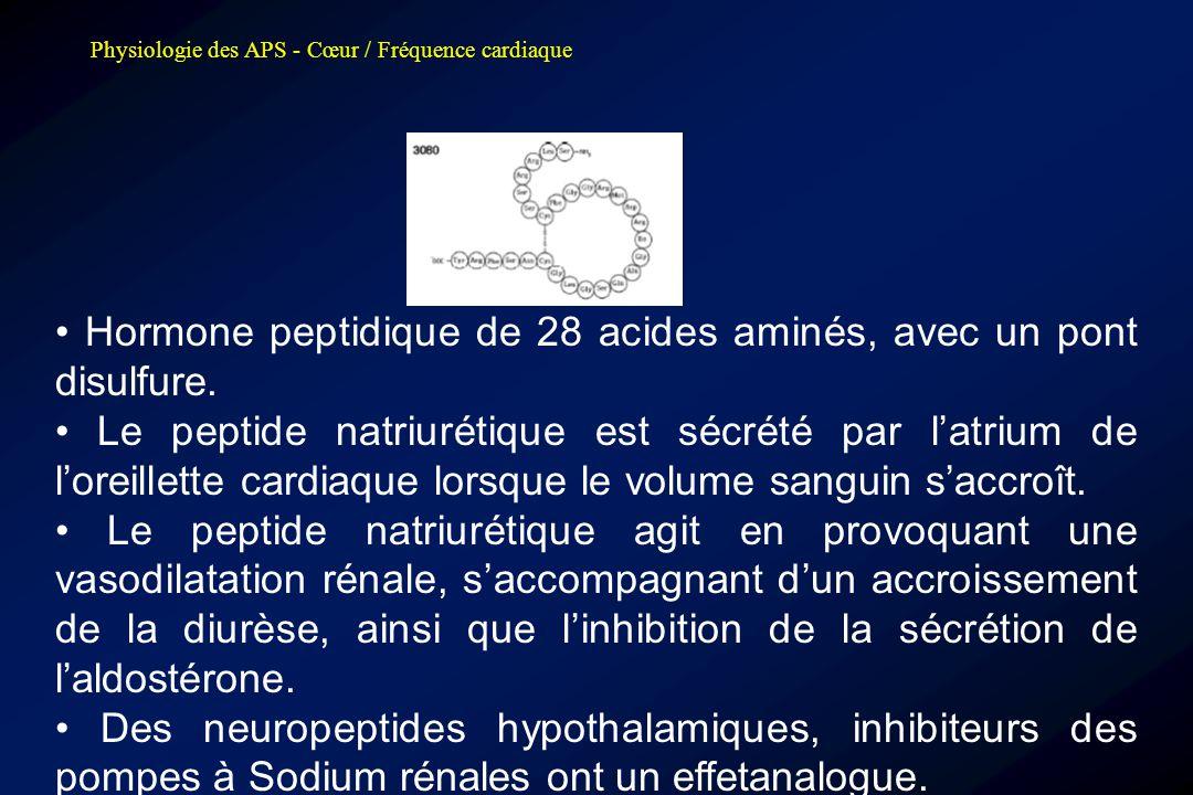 Physiologie des APS - Cœur / Fréquence cardiaque • Hormone peptidique de 28 acides aminés, avec un pont disulfure. • Le peptide natriurétique est sécr