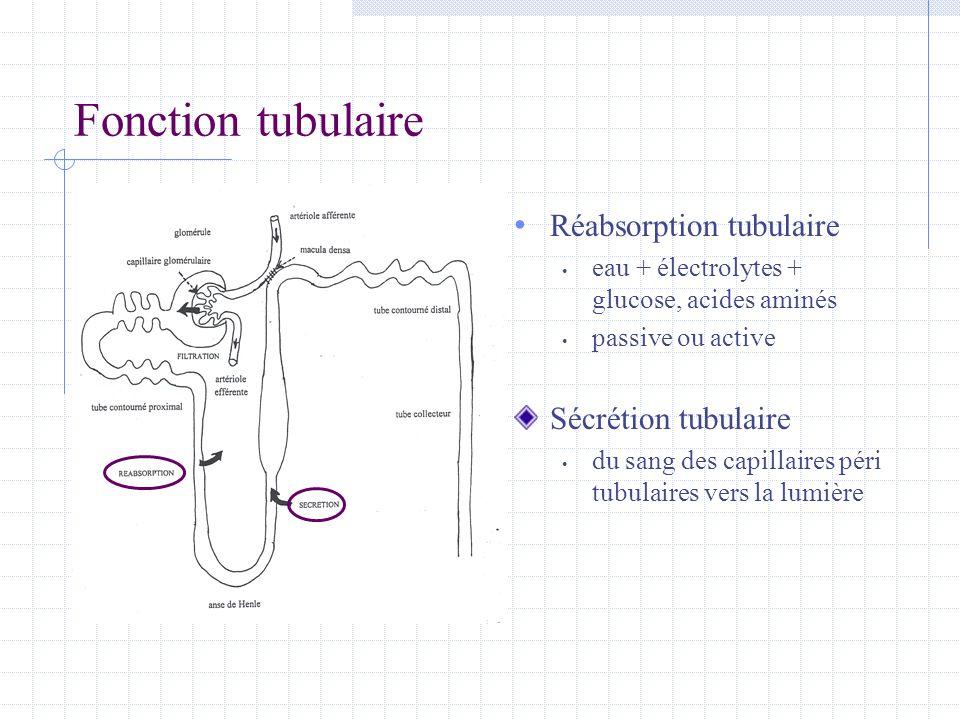 Fonction tubulaire • Réabsorption tubulaire • eau + électrolytes + glucose, acides aminés • passive ou active Sécrétion tubulaire • du sang des capill