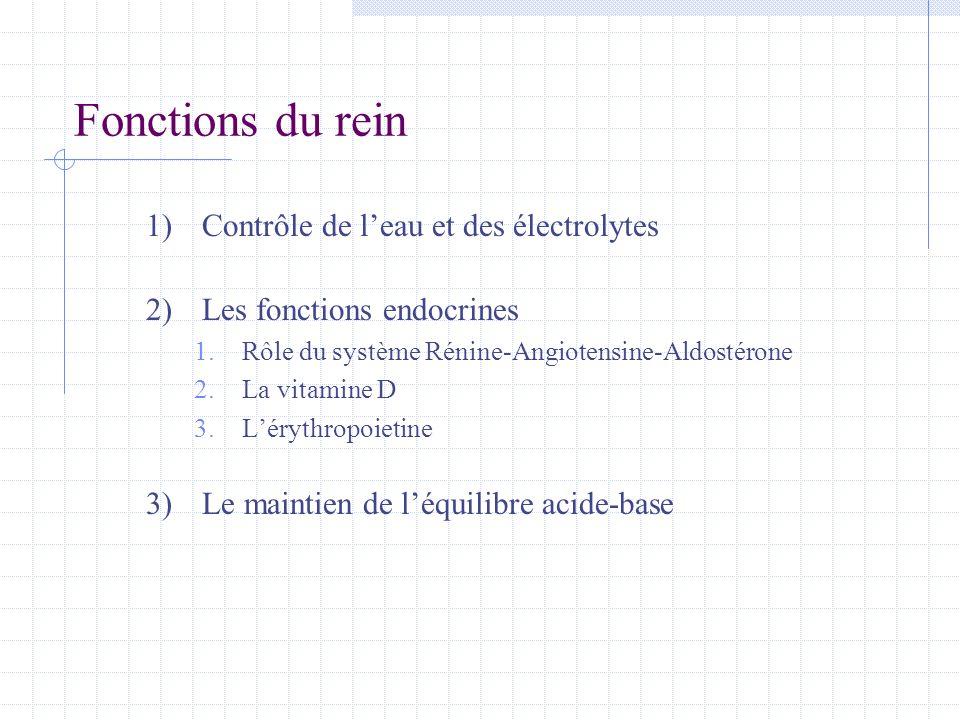 Fonctions du rein 1)Contrôle de l'eau et des électrolytes 2)Les fonctions endocrines 1.Rôle du système Rénine-Angiotensine-Aldostérone 2.La vitamine D
