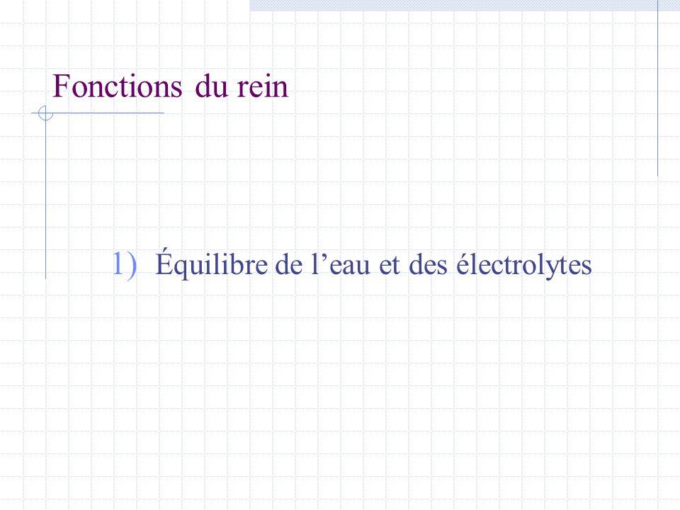 Fonctions du rein 1) Équilibre de l'eau et des électrolytes