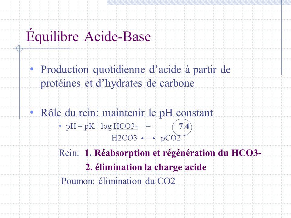 Équilibre Acide-Base • Production quotidienne d'acide à partir de protéines et d'hydrates de carbone • Rôle du rein: maintenir le pH constant • pH = p