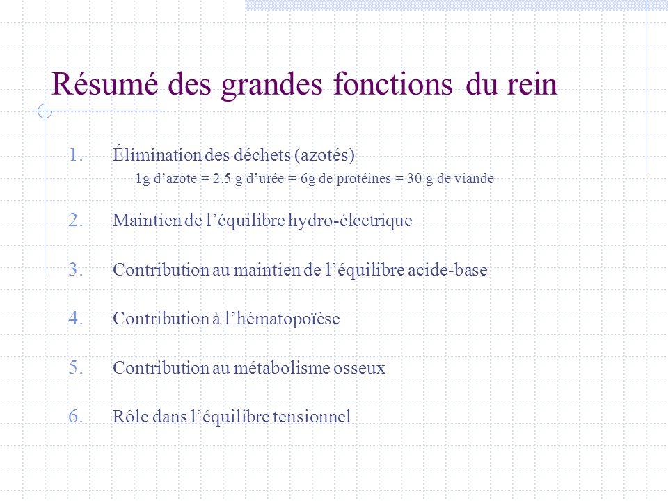 Résumé des grandes fonctions du rein 1. Élimination des déchets (azotés) 1g d'azote = 2.5 g d'urée = 6g de protéines = 30 g de viande 2. Maintien de l