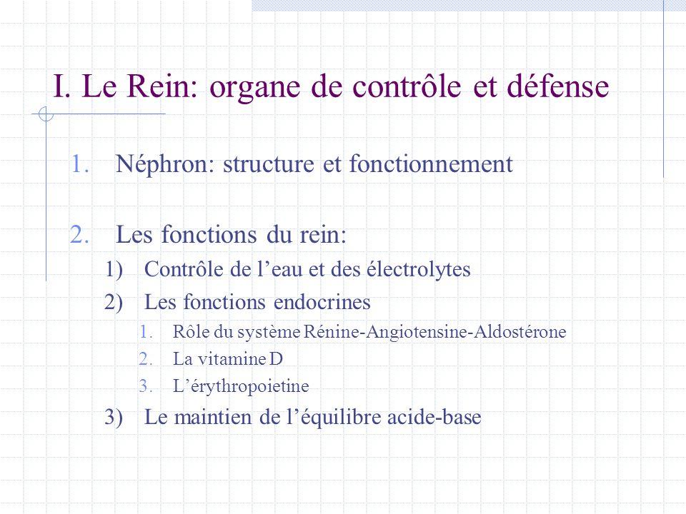 1.Néphron: structure et fonctionnement 2.Les fonctions du rein: 1)Contrôle de l'eau et des électrolytes 2)Les fonctions endocrines 1.Rôle du système R