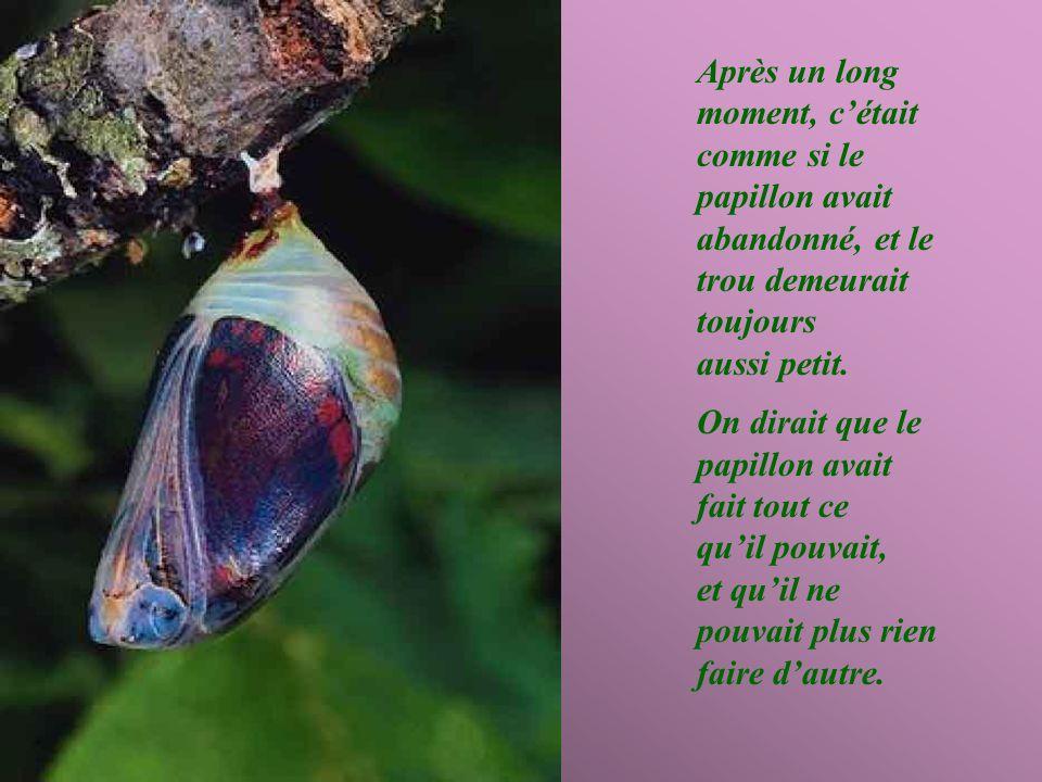 Un jour, apparut un petit trou dans un coccon; un homme, qui passait à tout hasard, s'arrêta de longues heures à observer le papillon, qui s'efforçait de sortir par ce petit trou.