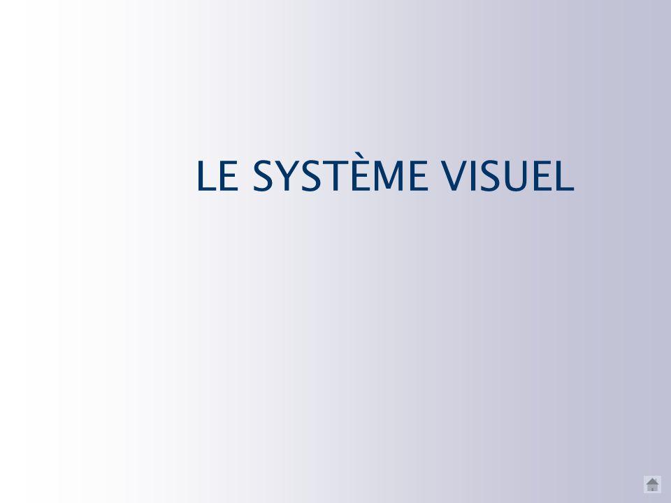 LE SYSTÈME VISUEL