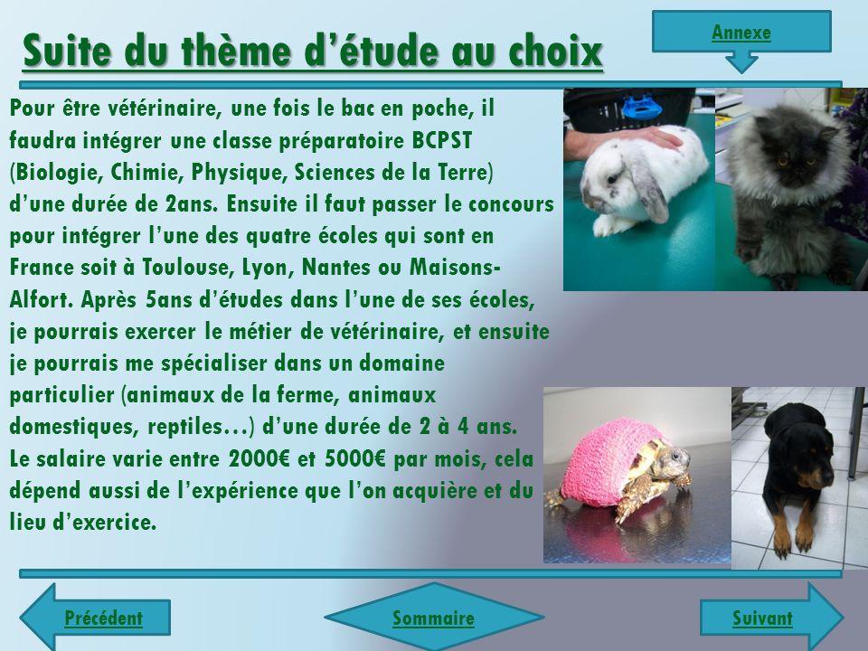 Suivant Précédent Sommaire LundiMardiMercrediJeudiVendredi Matin -Découverte de mes taches matinales (m'occuper des chats résidant dans la clinique).