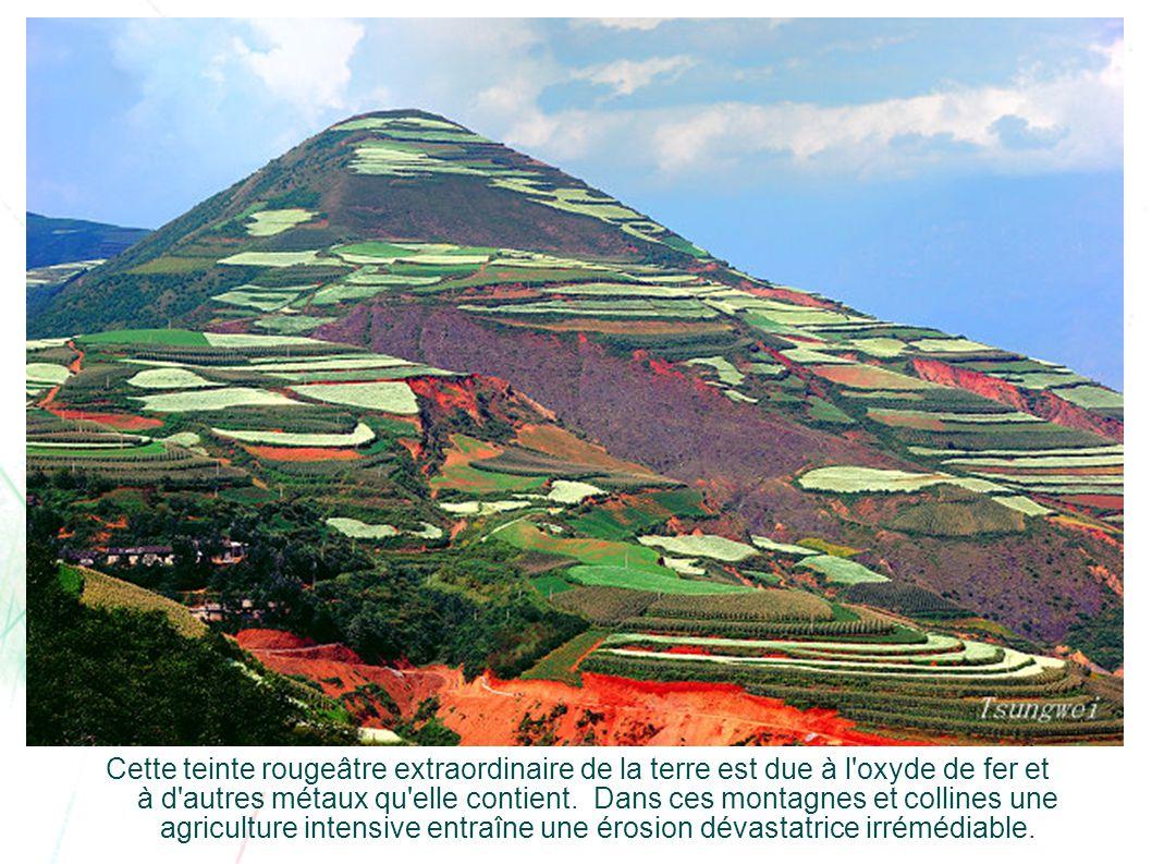…aujourd'hui, le « Lexiaguo » Dans la série 'Découverte du Monde'… Cette région est située au sud-ouest de Kunming, à 790 mètres au-dessus du niveau d