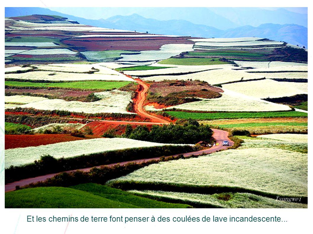 Le sol rouge accentue encore plus le relief des courbes de niveau des cultures.