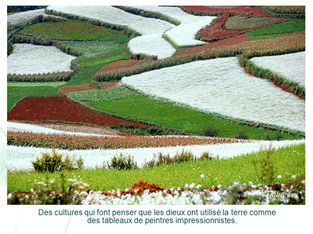 On y cultive des pommes de terre, du blé, du maïs, des fleurs, etc.
