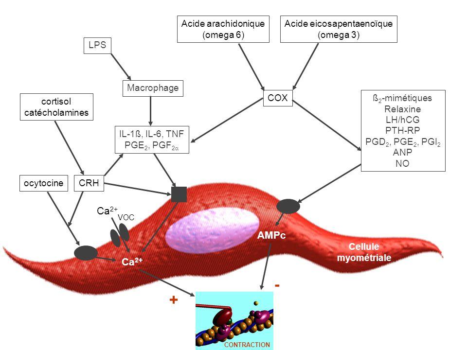 Cellule myométriale Ca 2+ AMPc LPS IL-1ß, IL-6, TNF PGE 2, PGF 2  Macrophage ß 2 -mimétiques Relaxine LH/hCG PTH-RP PGD 2, PGE 2, PGI 2 ANP NO COX Acide arachidonique (omega 6) Acide eicosapentaenoïque (omega 3) + - CONTRACTION VOC Ca 2+ ocytocinecortisol catécholamines CRH