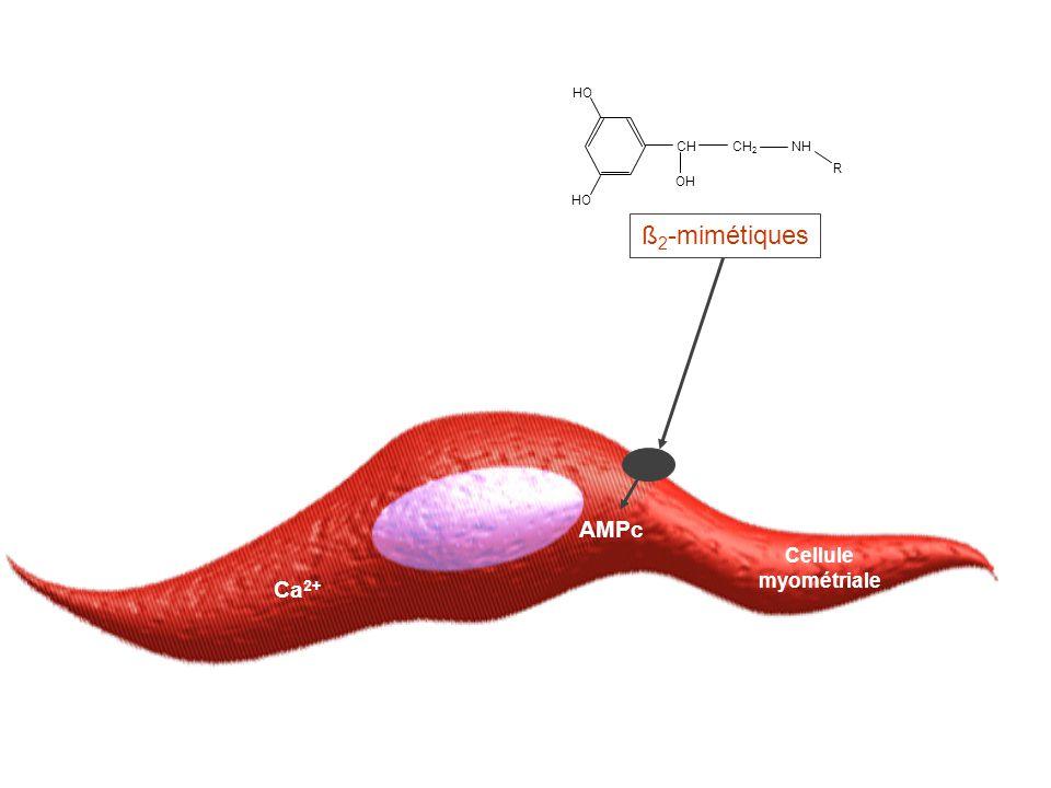 Cellule myométriale Ca 2+ AMPc ß 2 -mimétiques CH CH 2 NH R HO OH
