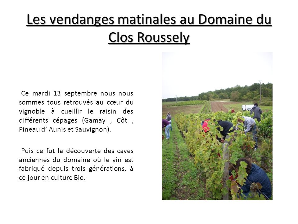Les vendanges matinales au Domaine du Clos Roussely Ce mardi 13 septembre nous nous sommes tous retrouvés au cœur du vignoble à cueillir le raisin des différents cépages (Gamay, Côt, Pineau d' Aunis et Sauvignon).