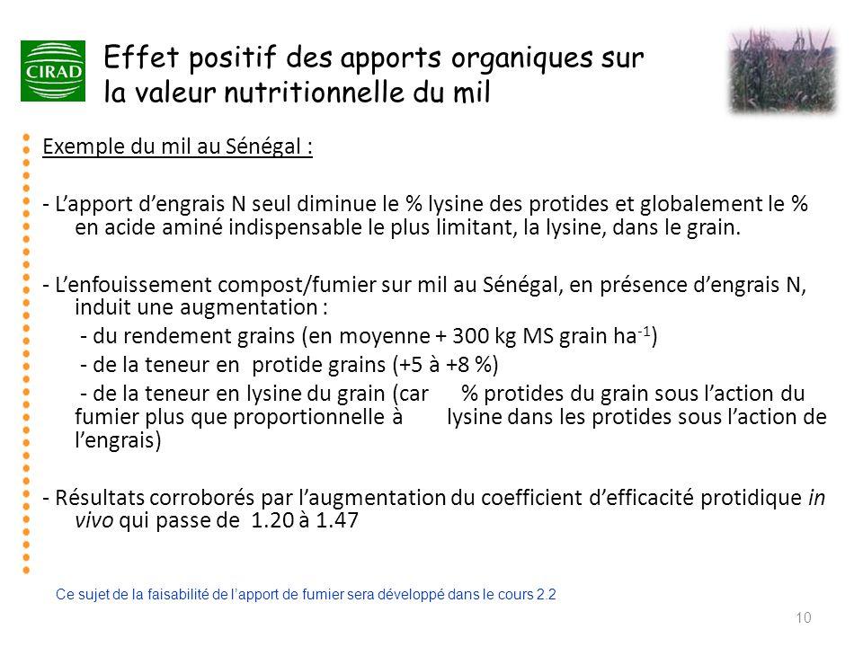 Effet positif des apports organiques sur la valeur nutritionnelle du mil 10 Exemple du mil au Sénégal : - L'apport d'engrais N seul diminue le % lysin