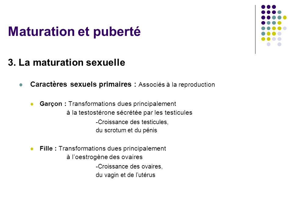 3. La maturation sexuelle  Caractères sexuels primaires : Associés à la reproduction  Garçon : Transformations dues principalement à la testostérone