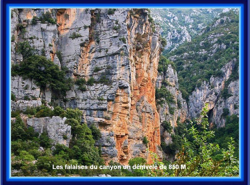 Les falaises du canyon un dénivelé de 850 M