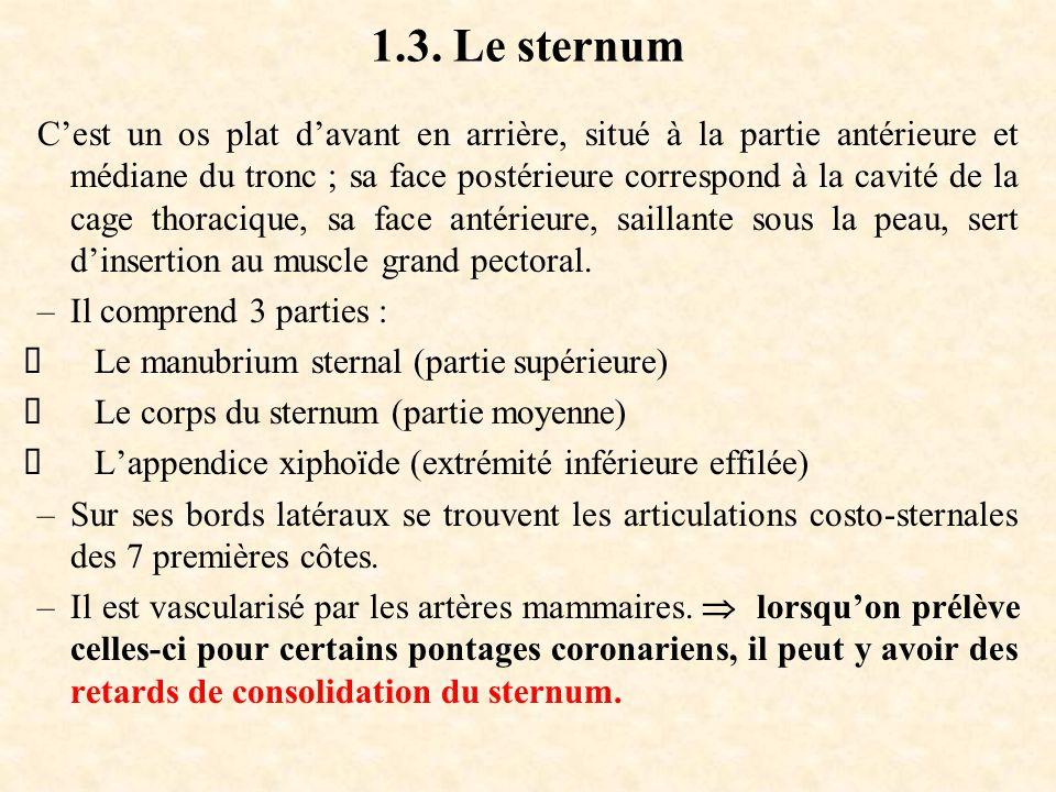 1.3. Le sternum C'est un os plat d'avant en arrière, situé à la partie antérieure et médiane du tronc ; sa face postérieure correspond à la cavité de