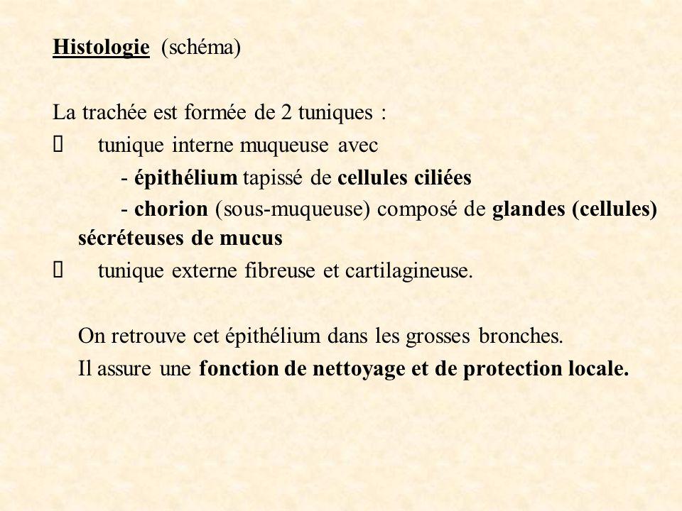 Histologie (schéma) La trachée est formée de 2 tuniques :  tunique interne muqueuse avec - épithélium tapissé de cellules ciliées - chorion (sous-muq