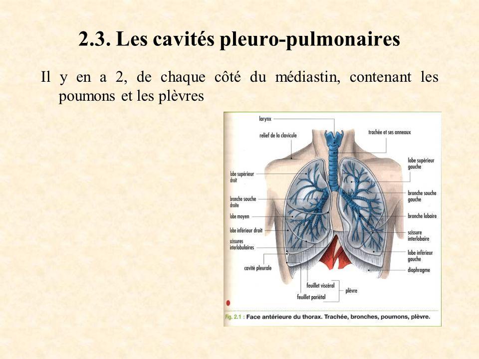 2.3. Les cavités pleuro-pulmonaires Il y en a 2, de chaque côté du médiastin, contenant les poumons et les plèvres