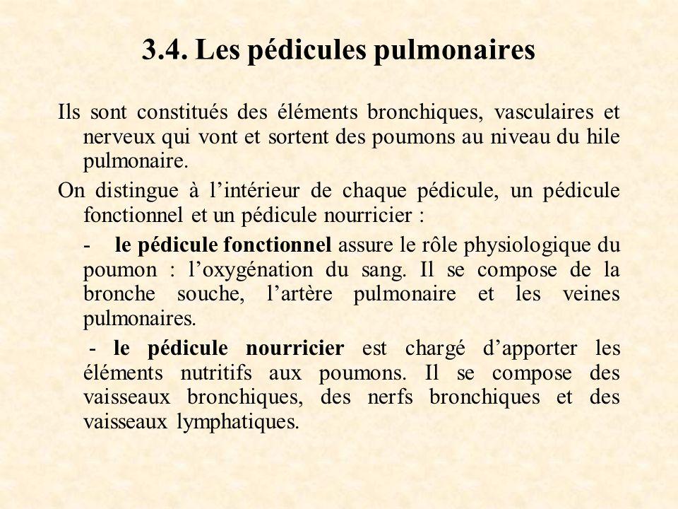 3.4. Les pédicules pulmonaires Ils sont constitués des éléments bronchiques, vasculaires et nerveux qui vont et sortent des poumons au niveau du hile