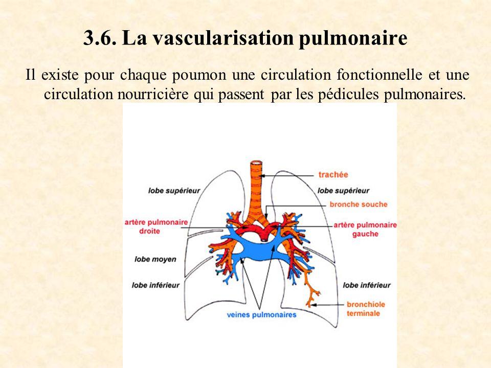 3.6. La vascularisation pulmonaire Il existe pour chaque poumon une circulation fonctionnelle et une circulation nourricière qui passent par les pédic