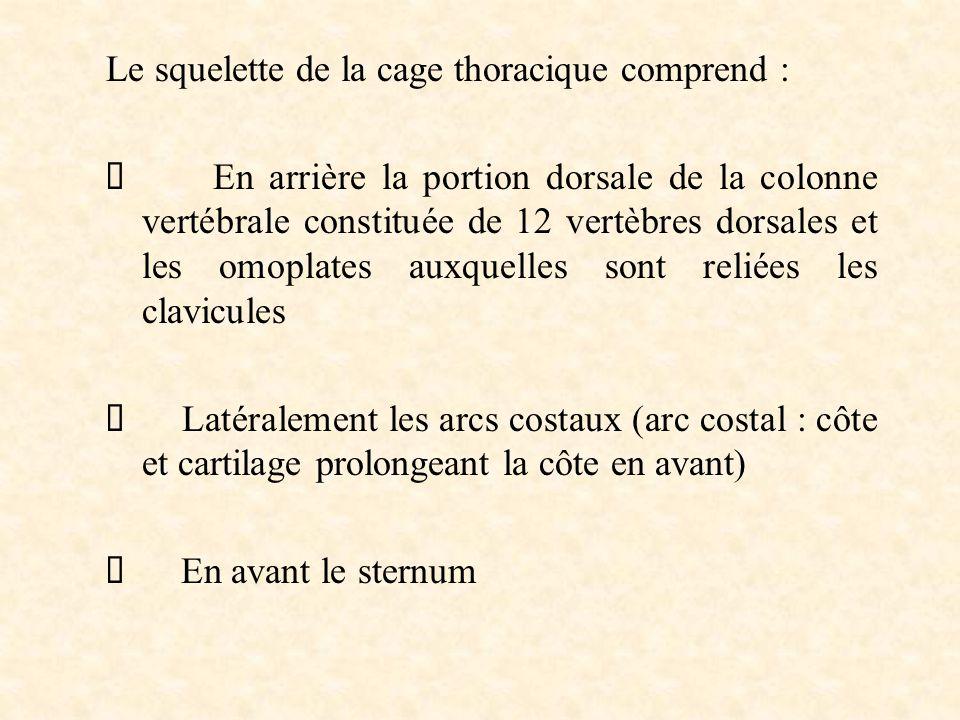 Le squelette de la cage thoracique comprend :  En arrière la portion dorsale de la colonne vertébrale constituée de 12 vertèbres dorsales et les omop