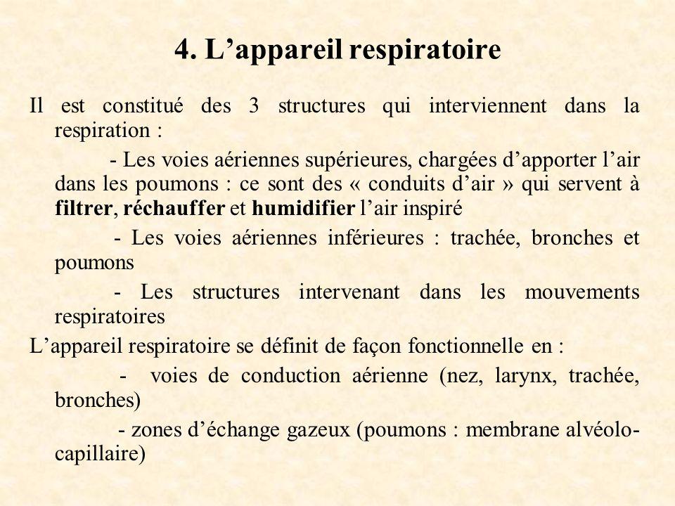 4. L'appareil respiratoire Il est constitué des 3 structures qui interviennent dans la respiration : - Les voies aériennes supérieures, chargées d'app