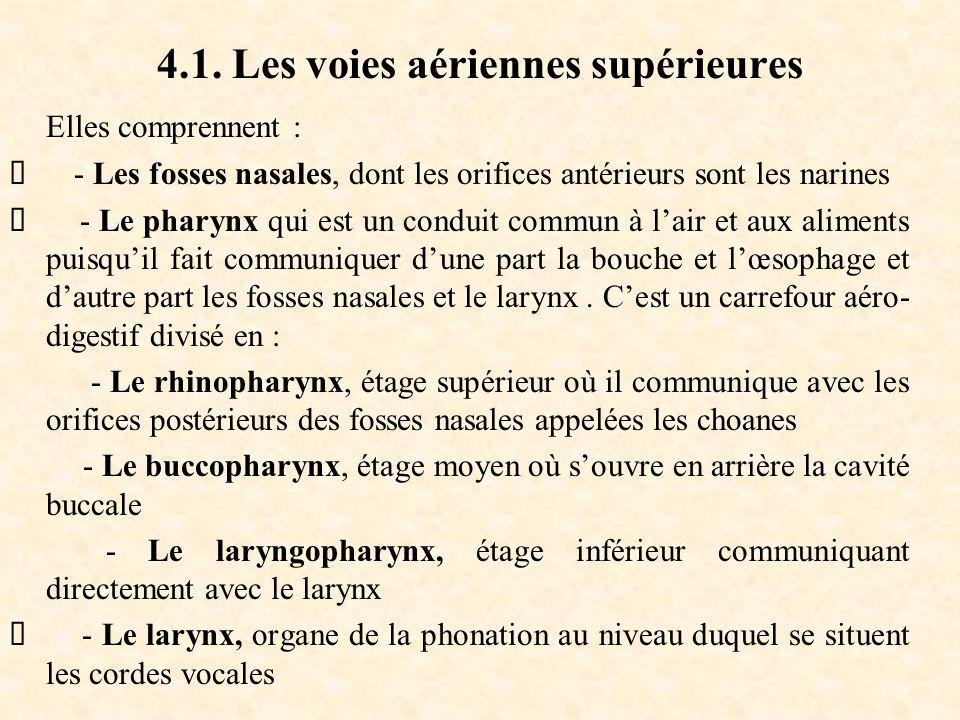 4.1. Les voies aériennes supérieures Elles comprennent :  - Les fosses nasales, dont les orifices antérieurs sont les narines  - Le pharynx qui est