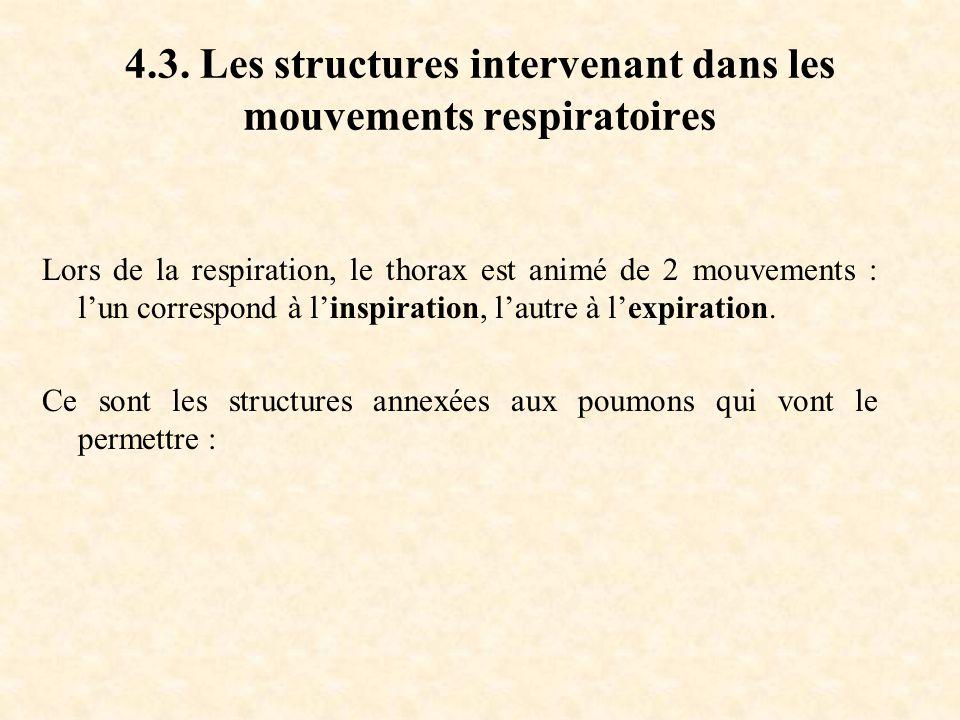 4.3. Les structures intervenant dans les mouvements respiratoires Lors de la respiration, le thorax est animé de 2 mouvements : l'un correspond à l'in