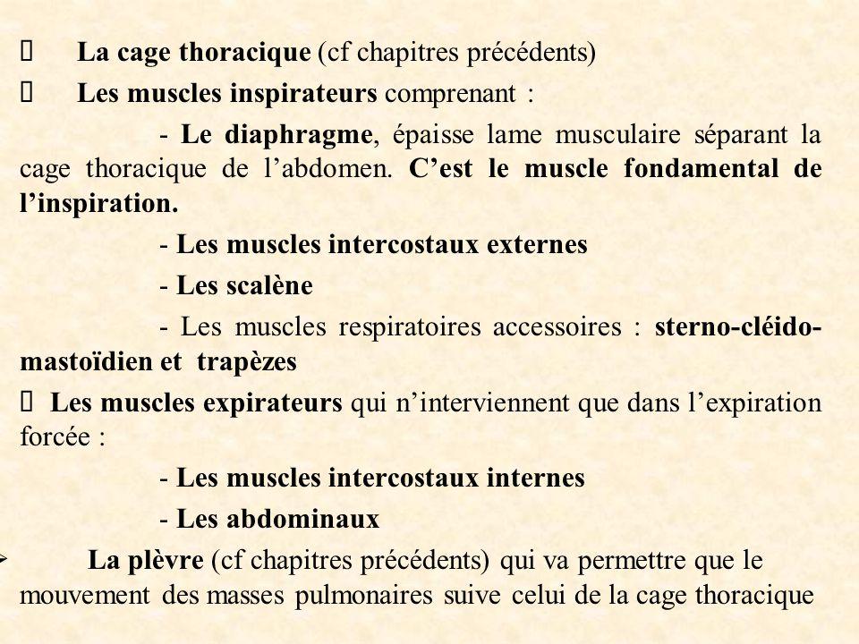  La cage thoracique (cf chapitres précédents)  Les muscles inspirateurs comprenant : - Le diaphragme, épaisse lame musculaire séparant la cage thora