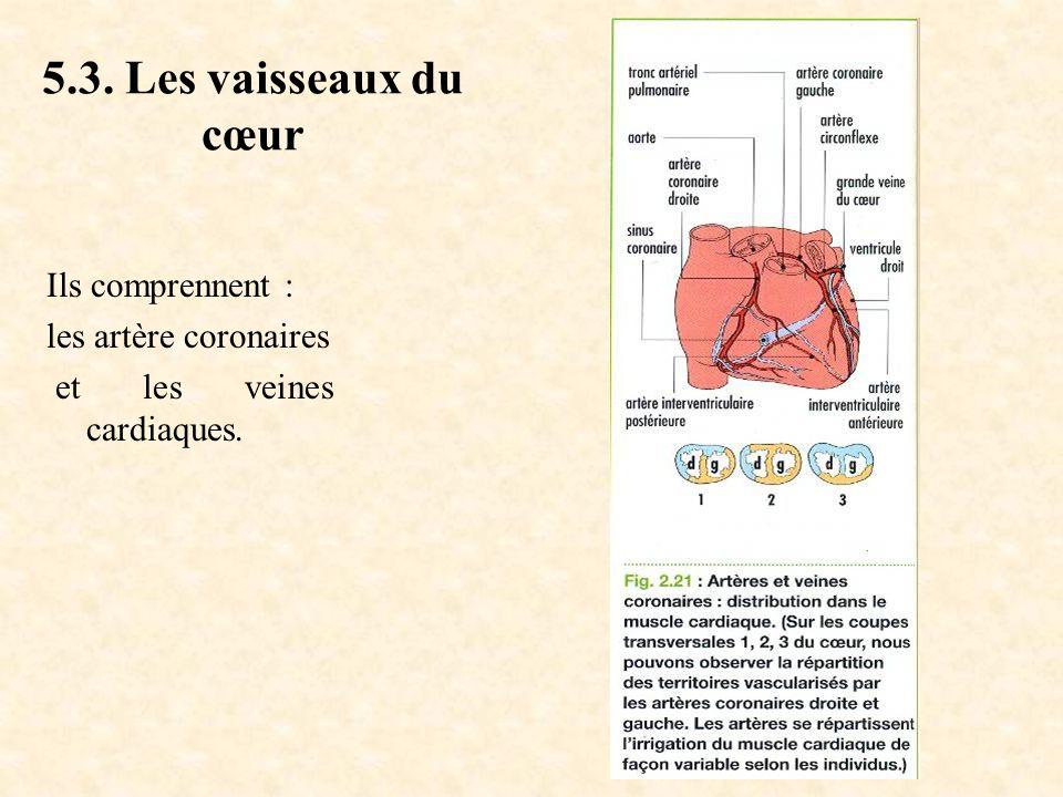 5.3. Les vaisseaux du cœur Ils comprennent : les artère coronaires et les veines cardiaques.